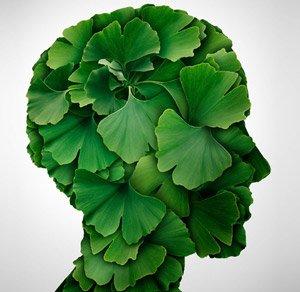 Ginkgo Biloba benefits Memory