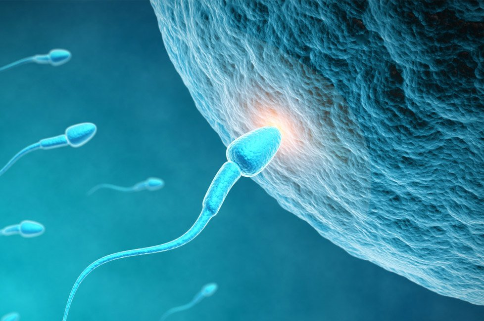 Increase Sperm Count and Boost Male Fertility